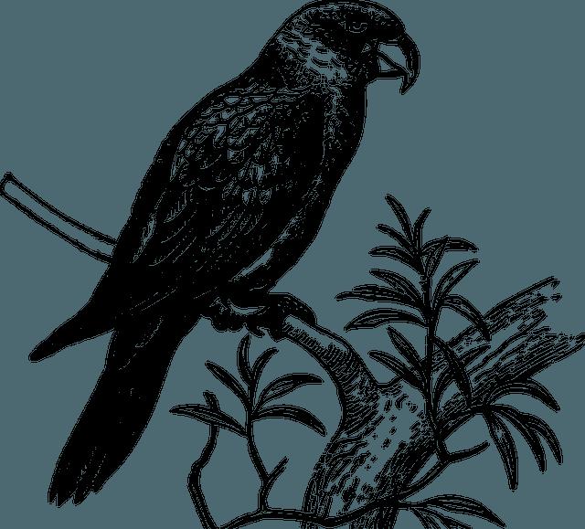 curiozitati pasari