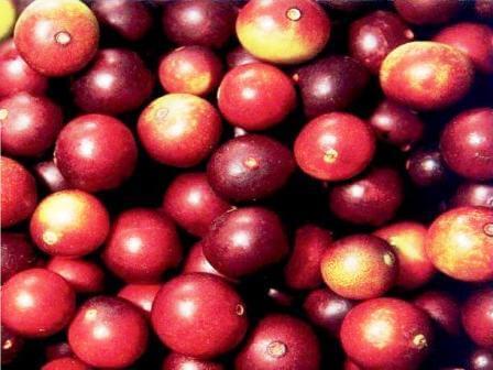 fructul camu camu