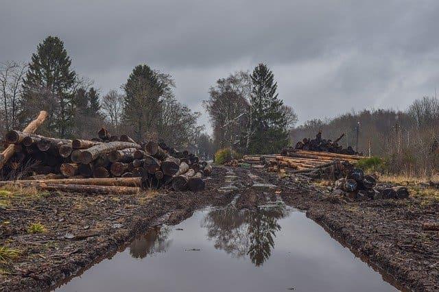 Eroziunea solului, alunecări de teren,, rolul vegetației